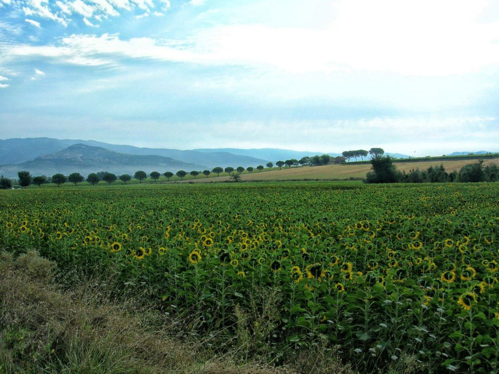 Ciclotour Toscana9
