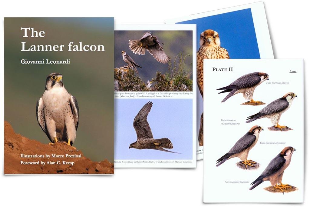 lanner_falcon