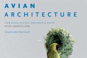 avian_architecture3