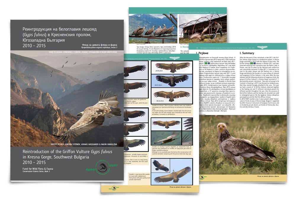 Reintroduction of Griffon Vulture Gyps fulvus in Kresna Gorge, Southwest Bulgaria 2010-2015 di Hristo Peshev, Emilian Stoynov, Atanas Grozdanov, Nadya Vangelova