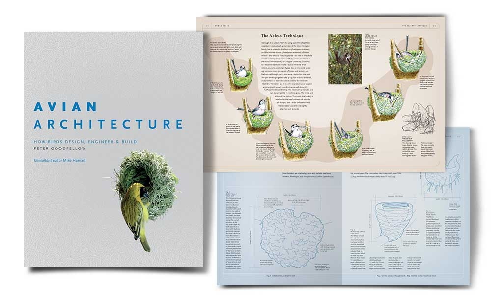 Avian Architecture: How Birds Design, Engineer, and Build di Peter Goodfellow. Vincitore del PROSE Award 2011 in Popular Science & Popular Mathematics, Association of American Publishers