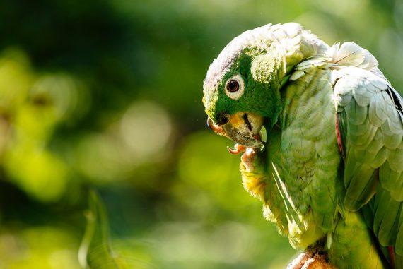 Alimentazione delle Amazzoni