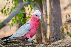 Foraging parrots